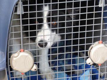 perro en una transporting