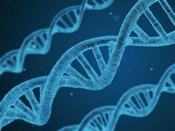 Una cadena de ADN