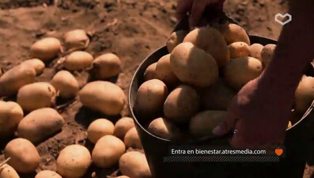 Añade la patata a tus platos: es uno de los alimentos más versátiles, completos y saludables