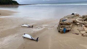Aparecen 14 delfines muertos en la orilla de una playa de Santander