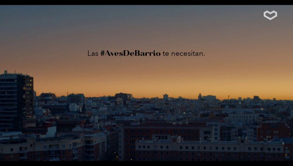 Aves de Barrio, la campaña para revitalizar al gorrión en las ciudades
