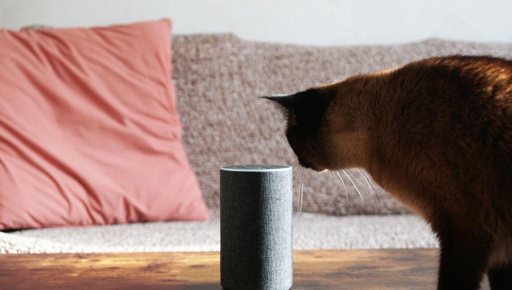 Amazon permitirá eliminar lo almacenado en Alexa, su asistente virtual.