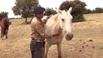 'Salva a un Caballo' ayuda a animales maltratados a encontrar un nuevo hogar
