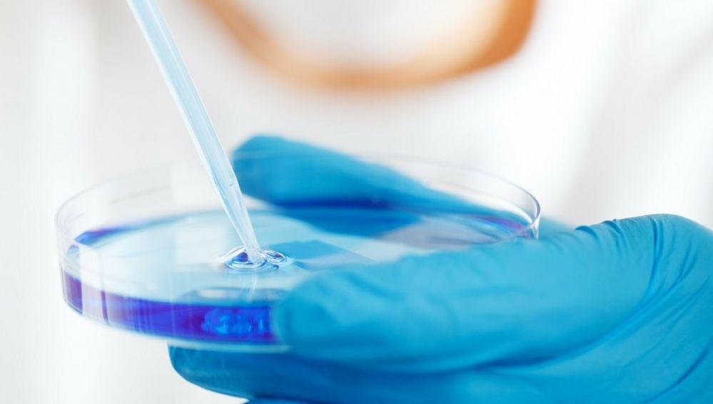 Una investigadora examina una muestra celular