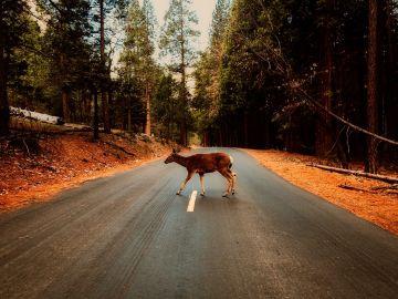 Animal en carretera