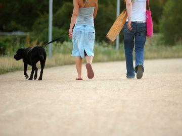 Perro de paseo con sus dueños