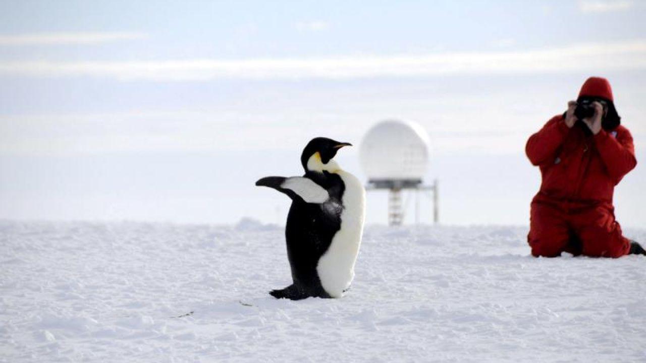 El Pingüino Emperador En Peligro De Extinción Por El Cambio Climático Hazte Eco