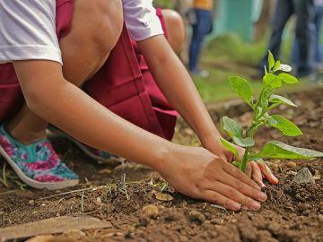 Niño plantando un árbol
