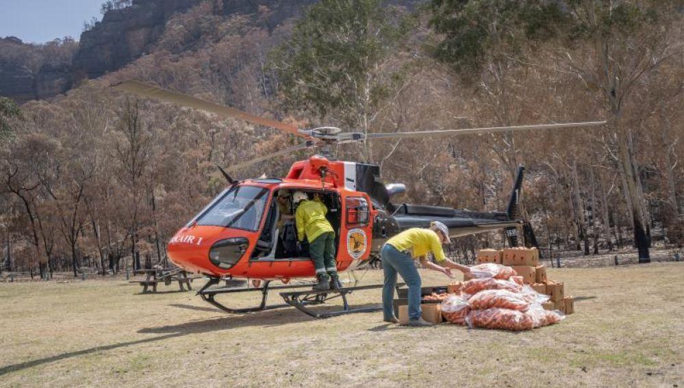 Australia lanza desde helicópteros comida a los animales afectados por los incendios
