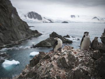 Población de pingüinos barbijo en Antártida
