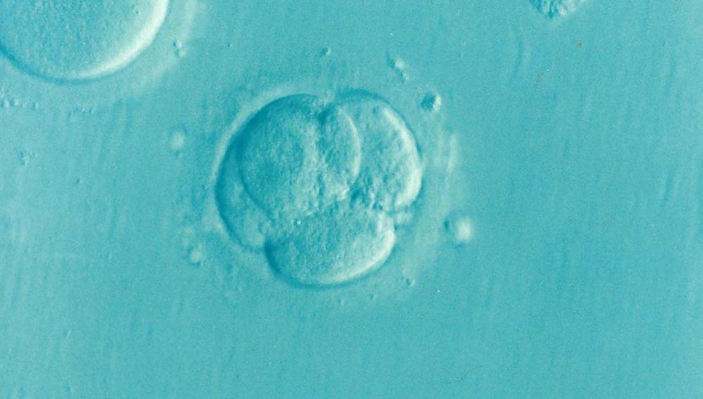 Embrión por fecundación in vitro