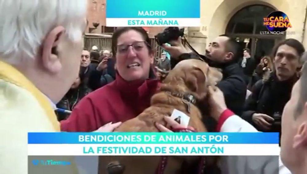 Disfruta de San Antón en compañía de tu mascota