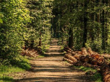 Deforestación forestal