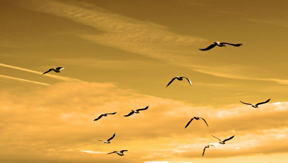 Aves en pleno vuelo