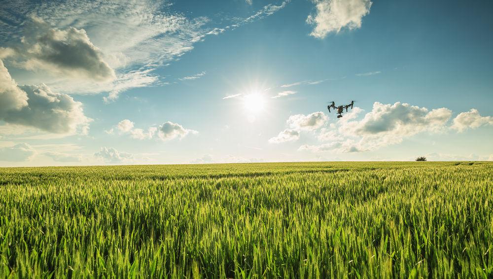 Dron en campos de cultivo