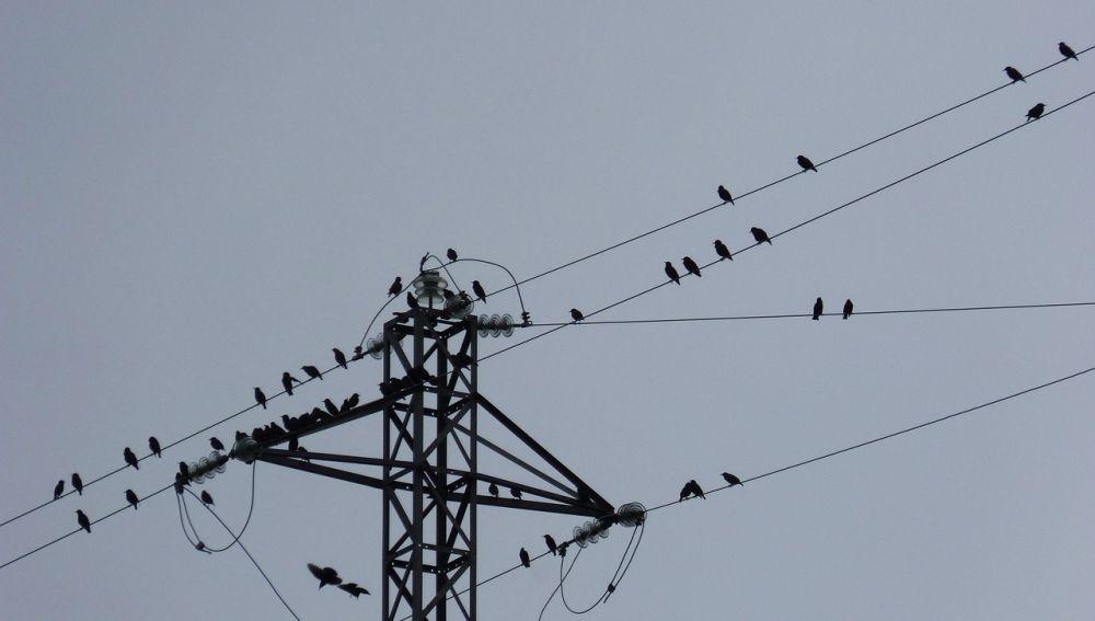 Aves en un tendido eléctrico