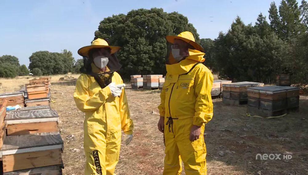 La mejor miel del mundo en 2019 es española y ecológica