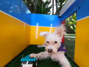 El fotomatón para perros de Simone Geirtz