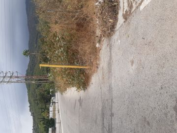 Carretera sin arcén invadida por la vegetación en Málaga